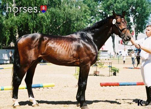 http://www.horses.sk/images/Nitra2003/000129.jpg
