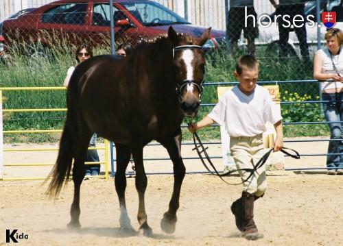 http://www.horses.sk/images/Nitra2003/000163.jpg